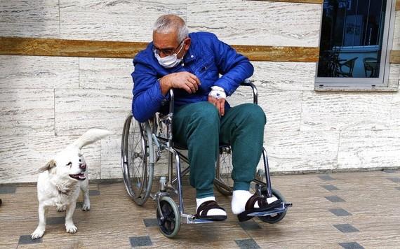 森圖爾克20日獲准出院,一坐著輪椅出來,珠珠就興奮地搖著尾巴團團轉,顯然不願再跟主人分開。(圖源:AP)
