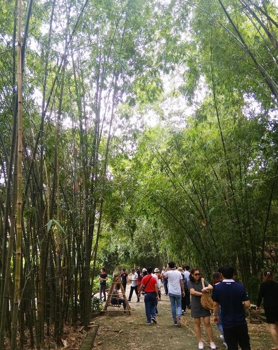 不少遊客選擇友善環境的旅程。