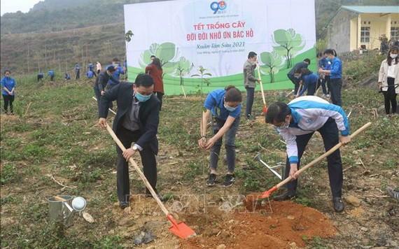 共青團員們在北坡國家特級歷史遺跡區一起出動種植樹林。(圖源:越通社)