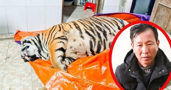 買老虎以製虎骨膏者受法律制裁