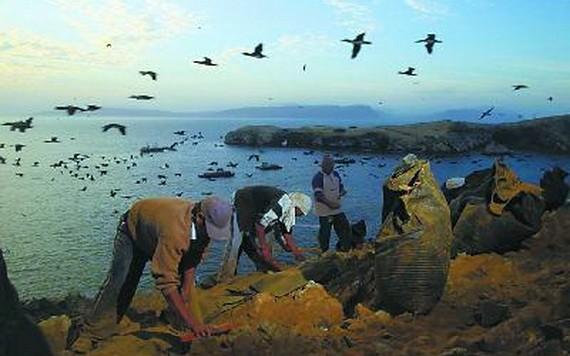 秘魯很多島嶼是海鳥天堂。