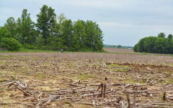 氣候變暖後,農作物的生長也同樣受到衝擊。(圖源:Getty Images)