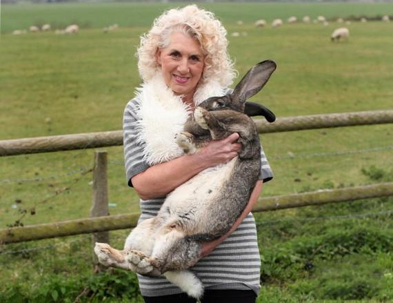 女主人安妮特-愛德華茲和她飼養的世界上最大的兔子。(圖源:互聯網)