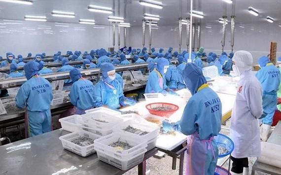 越南虾类加工后销往欧盟市场。(图源:世海)