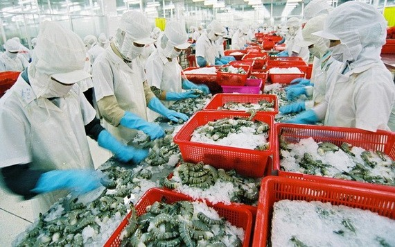 黑虎虾粗加工工段。(图源:潘庄)