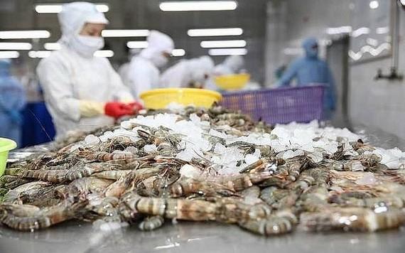 虾类出口生产线。(图源:黎仙)