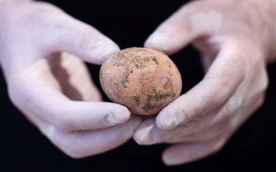 當地時間6月9日,以色列古物管理局宣佈考古學家發現了一枚保存較為完整的千年雞蛋。(圖源:互聯網)