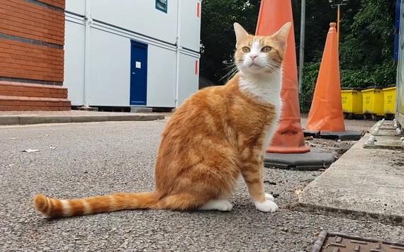 """英一隻貓被任命為車站""""首席捕鼠員"""""""