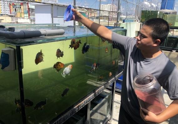 阮友勝在天台上養金魚的模式。