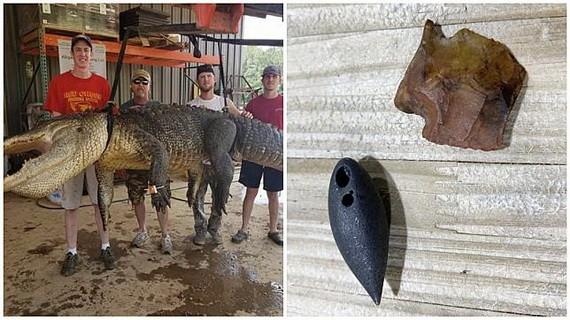 男子捕4米巨鱷剖肚驚見史前罕見文物