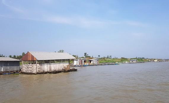 安江省搬遷後江上的 73 座浮動網箱養魚屋,以防疫情蔓延。(圖源:安江報)