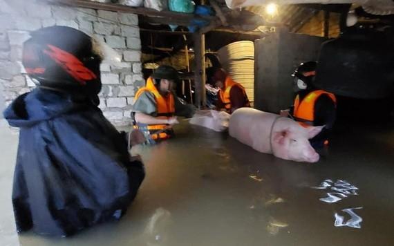 職能力量協助災區民眾及其財產和家畜遷移到安全地方。(圖源:VOV)