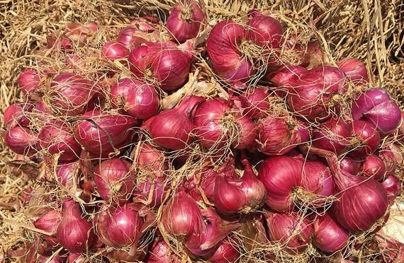 Hành tím là một sản phẩm đặc sản chủ lực của thị xã Vĩnh Châu