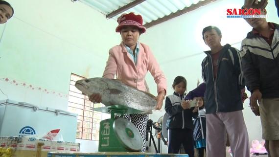 Người dân bắt cá nặng hơn 6kg nghi là sủ vàng
