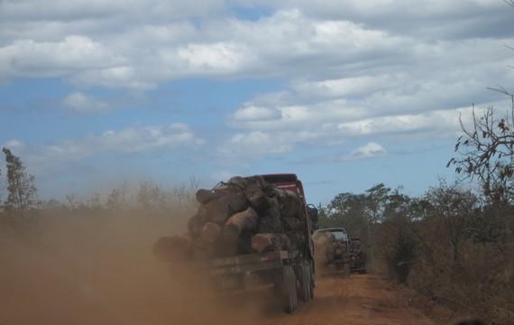 Xe chở gỗ lậu ngang nhiên chạy qua địa bàn huyện biên giới Tuy Đức. Ảnh CÔNG HOAN