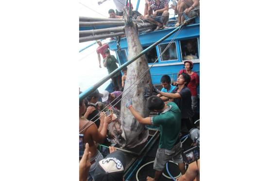 Cá ngừ đại dương 307kg được xác lập Kỷ lục Việt Nam