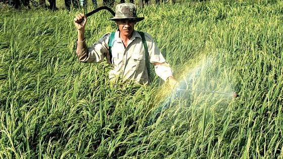 Theo Cục Bảo vệ thực vật, mỗi năm Việt Nam nhập khẩu tới 30.000 tấn thuốc trừ cỏ có chứa chất glyphosate. Ảnh minh họa: THÀNH TRÍ