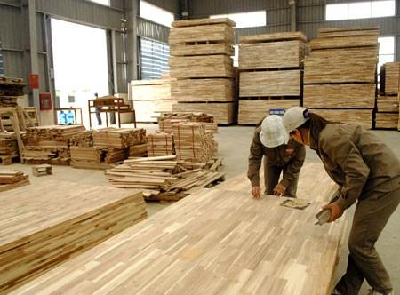 Chế biến ván gỗ cao su. Ảnh minh họa: Báo Gia Lai