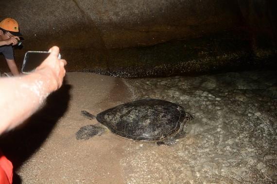 Cứu hộ thành công 113 trứng rùa biển.