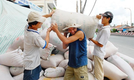 Workers transport rice bags to a milling plant in the Mekong Delta (Photo: SGGP)