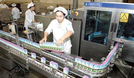 Dairy production at Vinamilk. (Photo: SGGP)