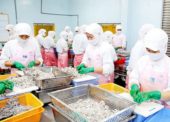 Vietnam's shrimp exports are expected to increase to more than $4 billion in 2019. (Photo: SGGP)