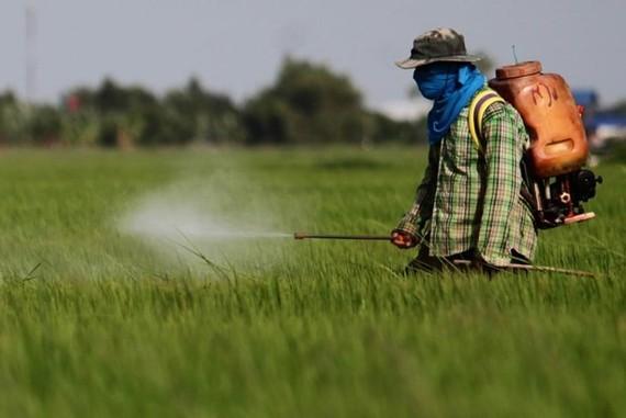 A Thai farmer sprays herbicide on the field (Photo: www.chiangraitimes.com)