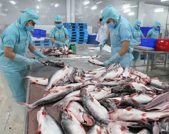 Workers preparing fish for further processing at a plant belonging to Sao Mai Group in the southern province of Dong Thap (Photo: VNA/VNS)