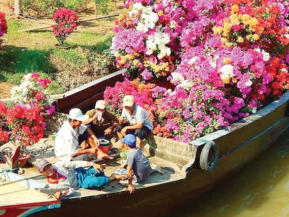 Flower and ornamental plants transported to the market for sale (Photo: SGGP)
