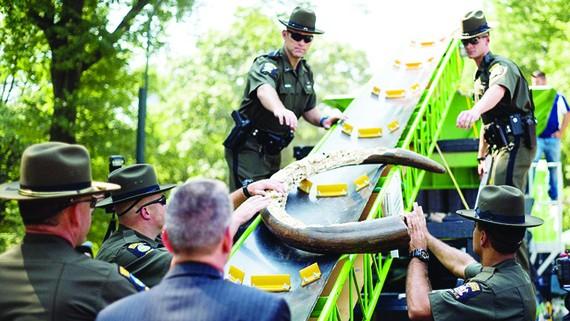 Tiêu hủy 2 tấn đồ chế tác từ ngà voi