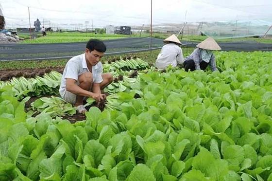 Thu nhập bình quân khu vực nông thôn đạt 4.098.000 đồng/tháng