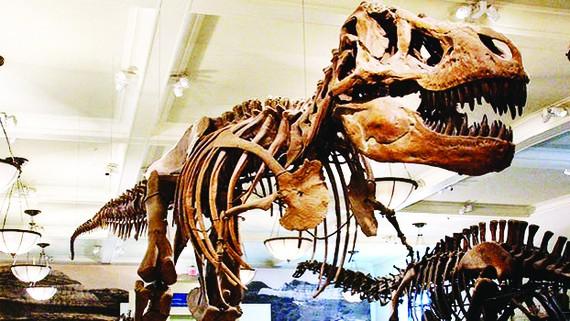 Ðấu giá hóa thạch khủng long
