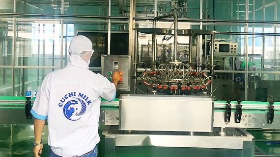 Từ nguồn vốn chính sách hỗ trợ nhà nước, HTX bò sữa Tân Thông Hội  xây dựng nhà máy chế biến sữa hiện đại. Ảnh:  THANH HẢI