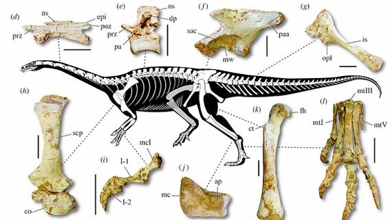 Hóa thạch khủng long cổ dài lâu đời nhất
