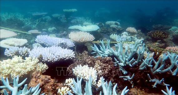 San hô tại rạn san hô Great Barrier Reef, ngày 19-4-2018. Ảnh: AFP/TTXVN