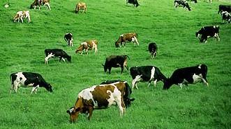 Giảm phát thải trong nông nghiệp
