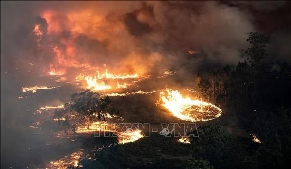 Các đám cháy rừng lan rộng tại bang Victoria, Australia. Ảnh: AFP/TTXVN