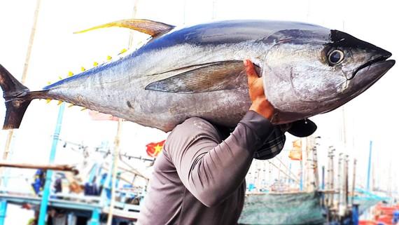 Ngư dân Phú Yên câu được con cá bò gù khủng.  Ảnh: NGỌC OAI