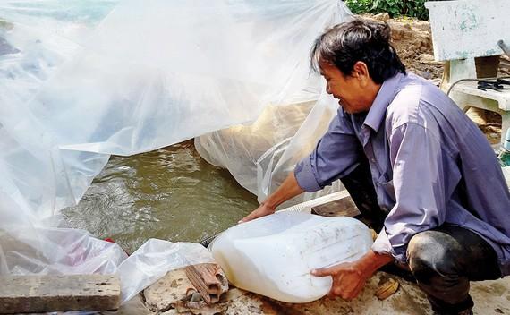 Người dân Tiền Giang tích trữ nước ngọt  để tưới cho vườn cây ăn trái