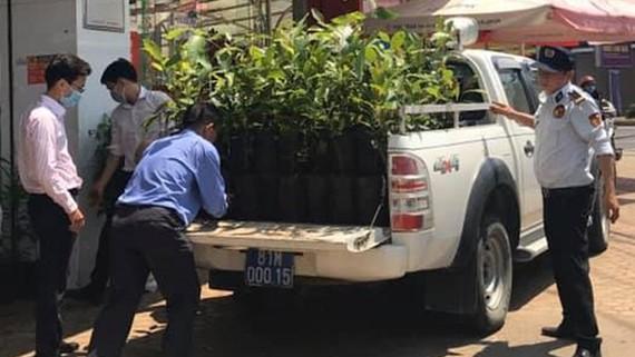 100 cây K'nia được anh Nguyễn Quang Huy tặng thị xã An Khê (tỉnh Gia Lai)
