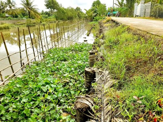 Nông dân chung tay phòng chống sạt lở ở xã Đông Phước A,  huyện Châu Thành, tỉnh Hậu Giang