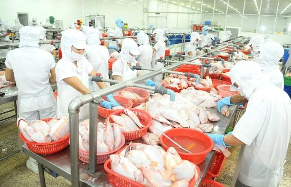 Chế biến cá xuất khẩu tại Công ty APT, TPHCM. Ảnh: CAO THĂNG