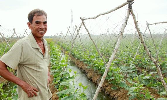 Nhờ chuyển đổi sản xuất hợp lý, nông dân  huyện Long Phú, tỉnh Sóc Trăng được vụ hoa màu. Ảnh: TUẤN QUANG