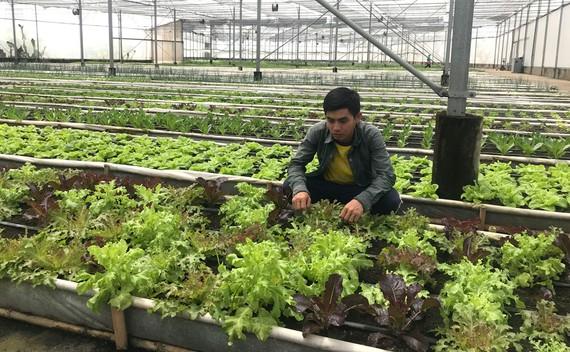 Trang trại Nhất Thống (huyện Nhà Bè) sản xuất nông nghiệp hữu cơ đạt chuẩn quốc tế