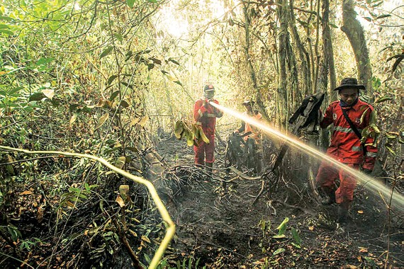 Rừng nhiệt đới bị phá hủy ở Indonesia