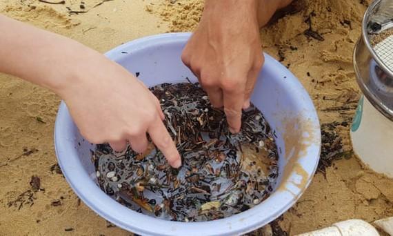 Vi nhựa và chất hữu cơ trôi nổi trong nước ở bãi biển Manly Cove tại Sydney, Australia