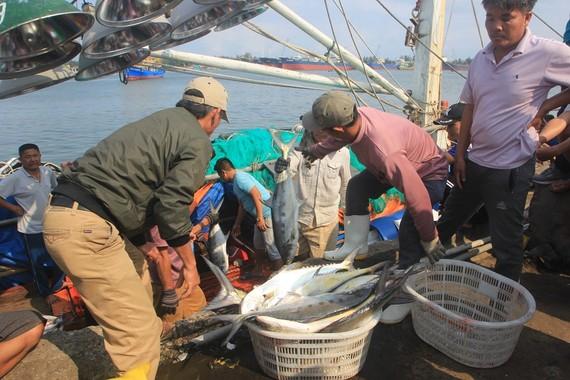 Ngư dân Quảng Trị trúng mẻ cá lớn