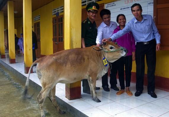 Tặng bò giống cho người nghèo
