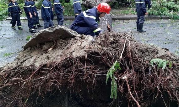 Rất nhiều cây xanh tại Huế bị gió bão số 5 đánh bật trốc gốc 
