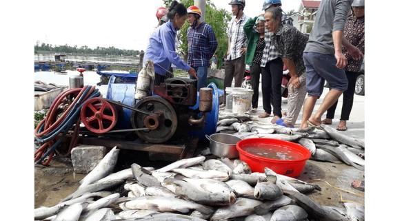 Cá nuôi trong lồng bè bị chết chưa rõ nguyên nhân